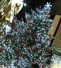 渋谷PARCO前のツリー♪