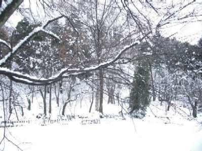 雪の船岡公園1