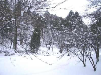 雪の船岡公園2